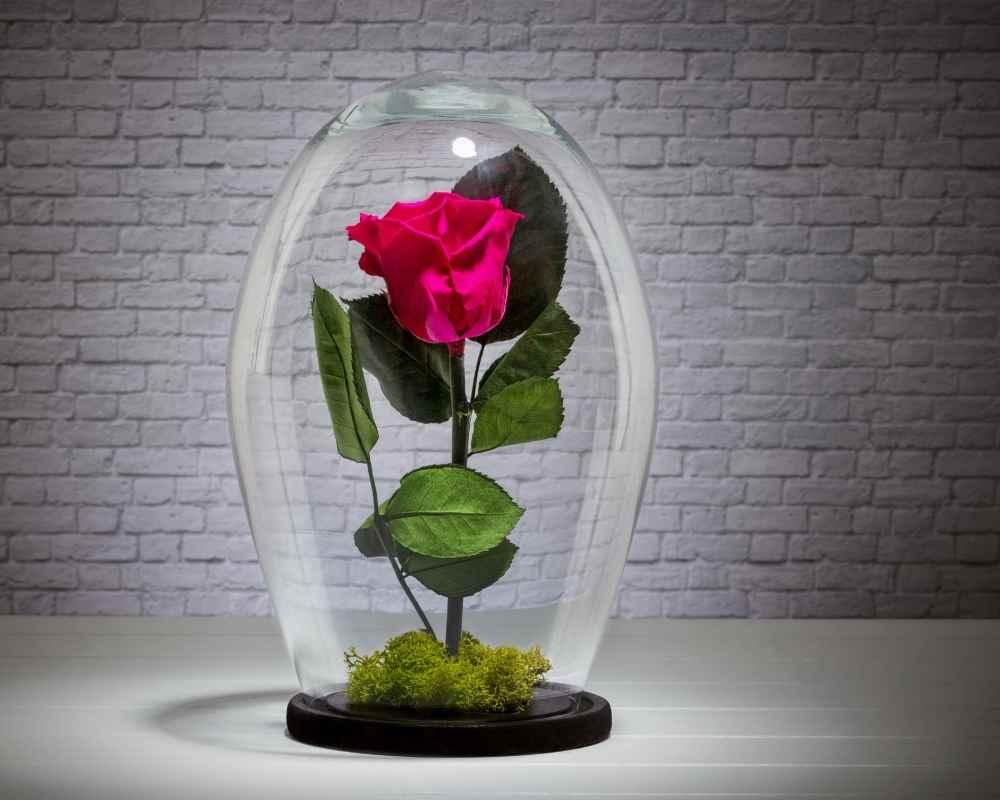rose éternelle sous cloche livraison